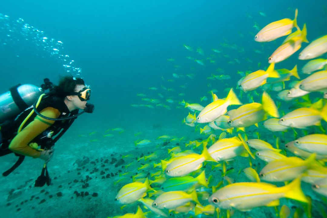 A diver looking at a school of yellow tropical fish under water