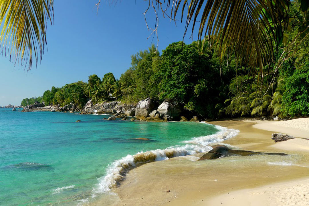 A golden beach on Mahe island with lush green trees surrounding it