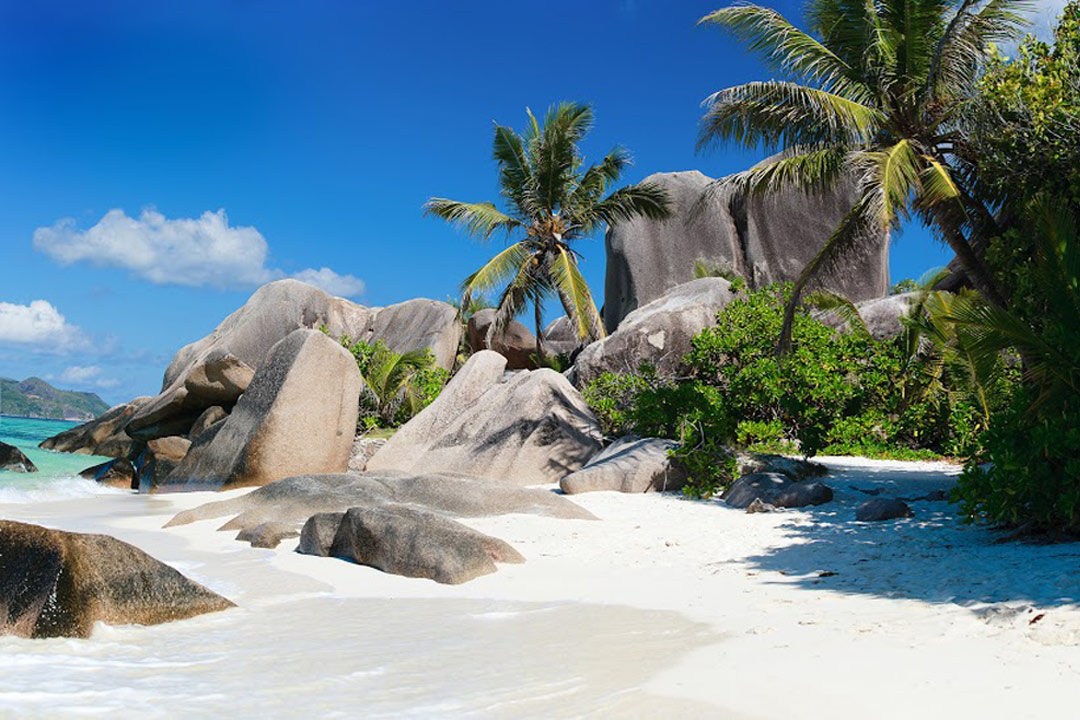 White pristine sand on a granite sheltered beach with tall green palm trees