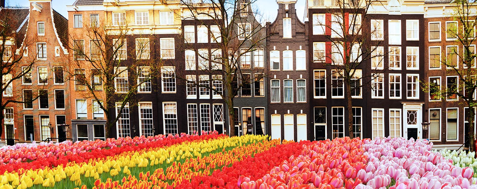 A row of traditional narrow Amsterdam homes, rows of colourful flowers are in front