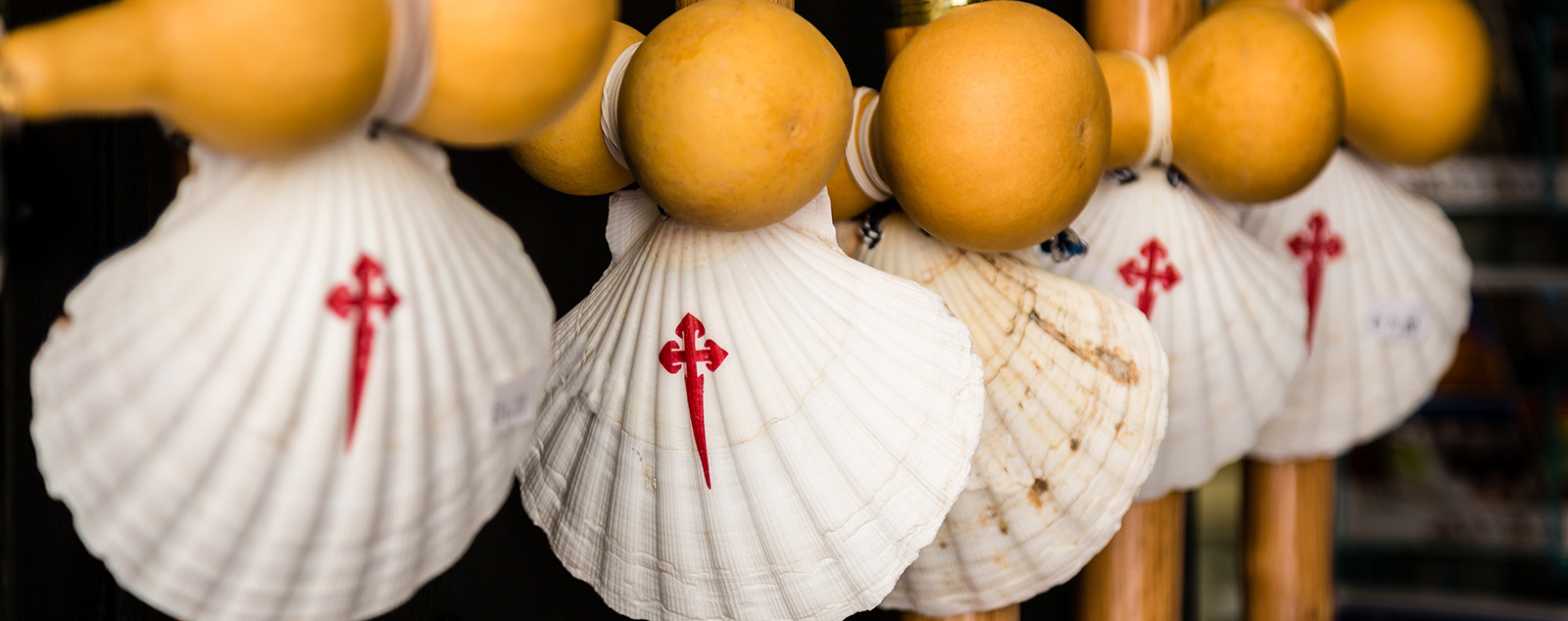The traditional painted scallop shells of the camino attached to pilgrims walking sticks