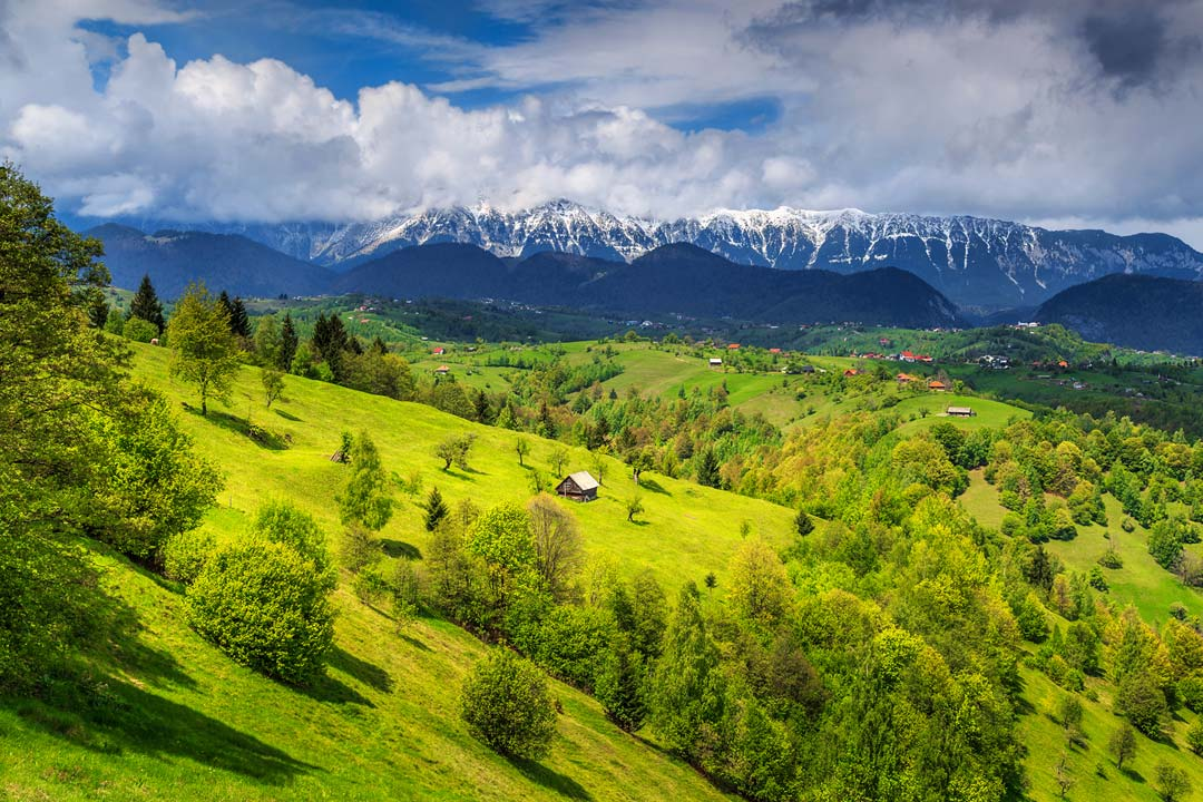 rolling green hills with the backdrop of snowcapped mountains in the background