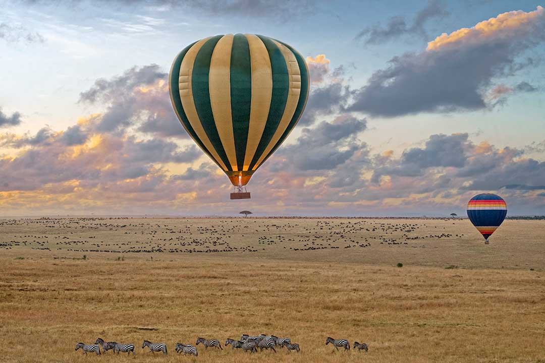 2 hot air balloons floating over the horizon above African scrubland with a herd of Zebra below