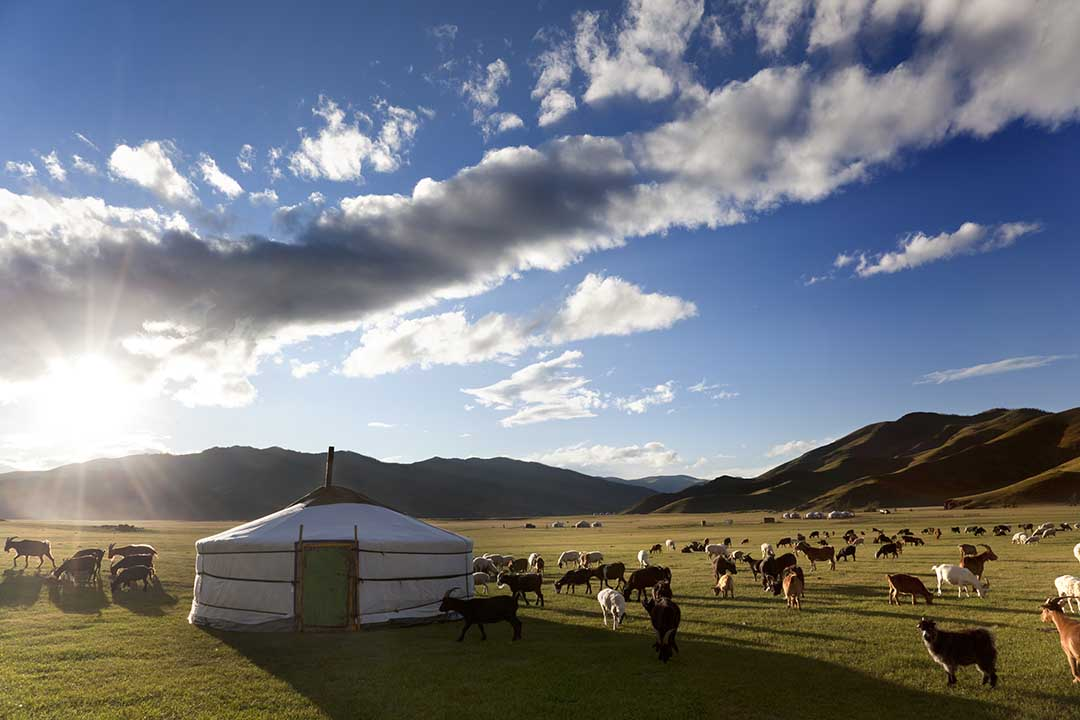 The sun rises in a valley while lambs graze freely around a traditional Ger tent