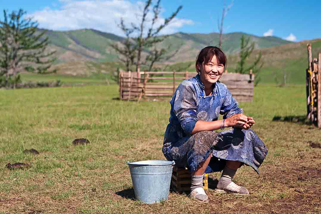 Mongolian woman in national clothing has been milking a yak, she is sat on a crate in a green field with a mountainous backdrop