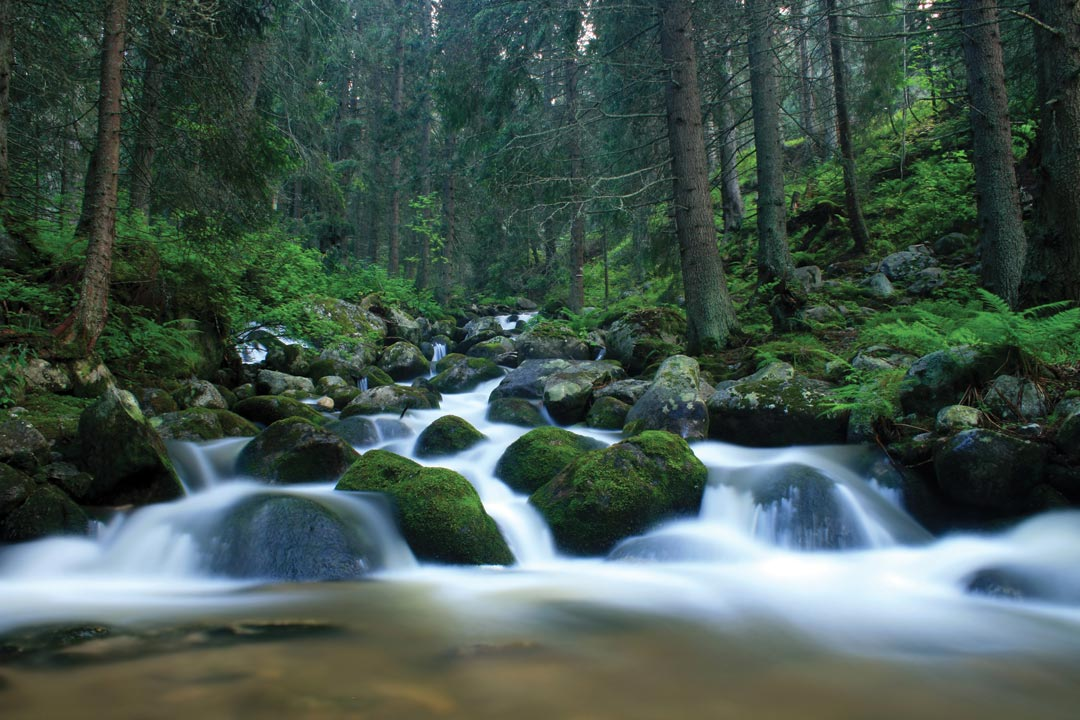 Water cascades down a river around rocks surrounded by dense forest