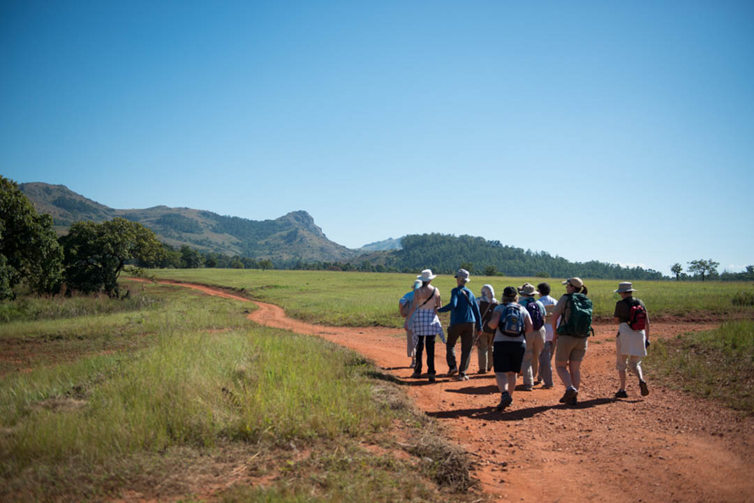 The Traveleyes group walking in Mlilwane Nature Reserve with forested hills in the distance