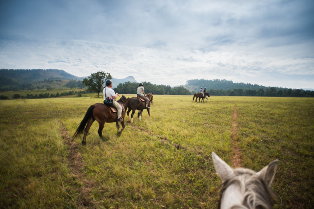 horseriding at Mlilwane through green grass with trees in the distance