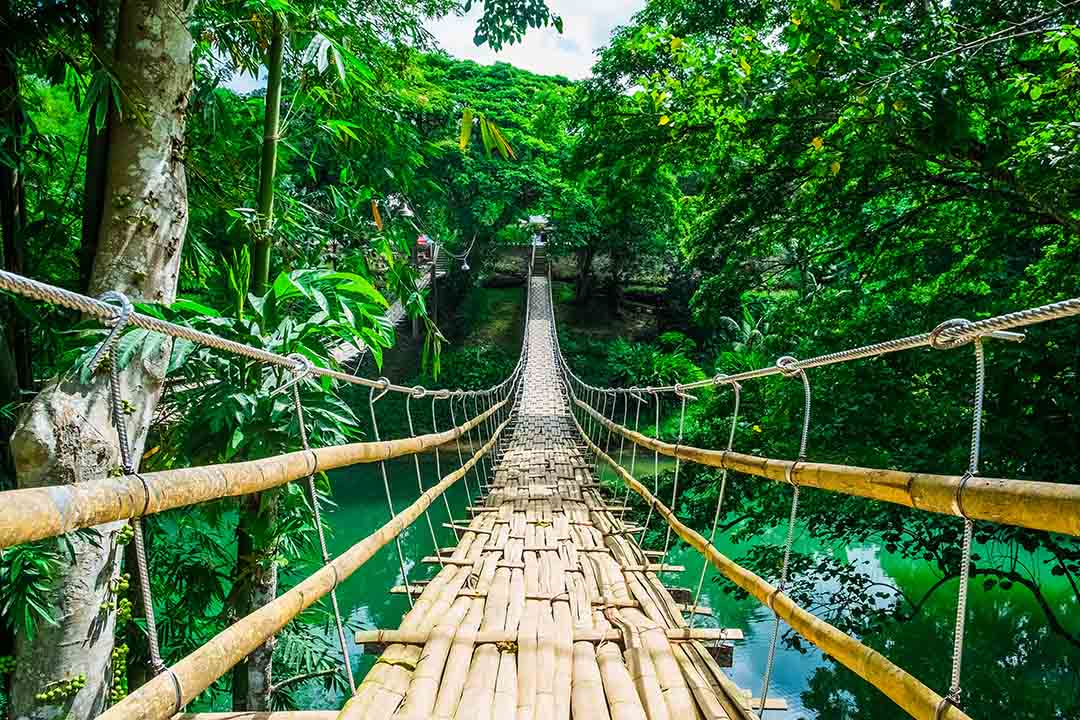 Bamboo suspension bridge over river with bright green vegetation all around