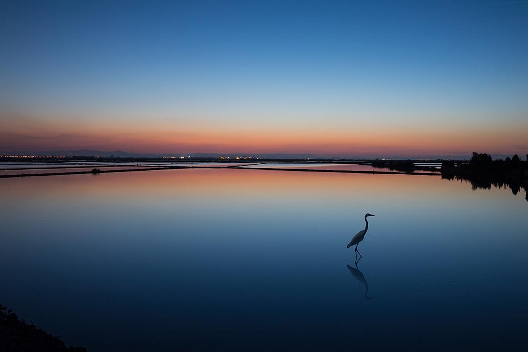 Valencia wetlands at dusk, dusky hues and a lone bird
