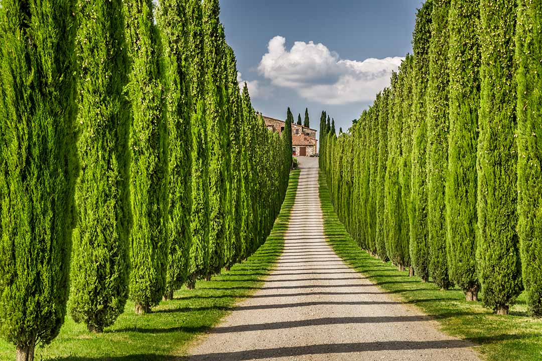 A path lined by cypresses lead to a Tuscan farmhouse