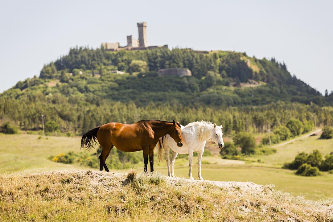 Two horses stand on a hill with a Tuscan tower behind them