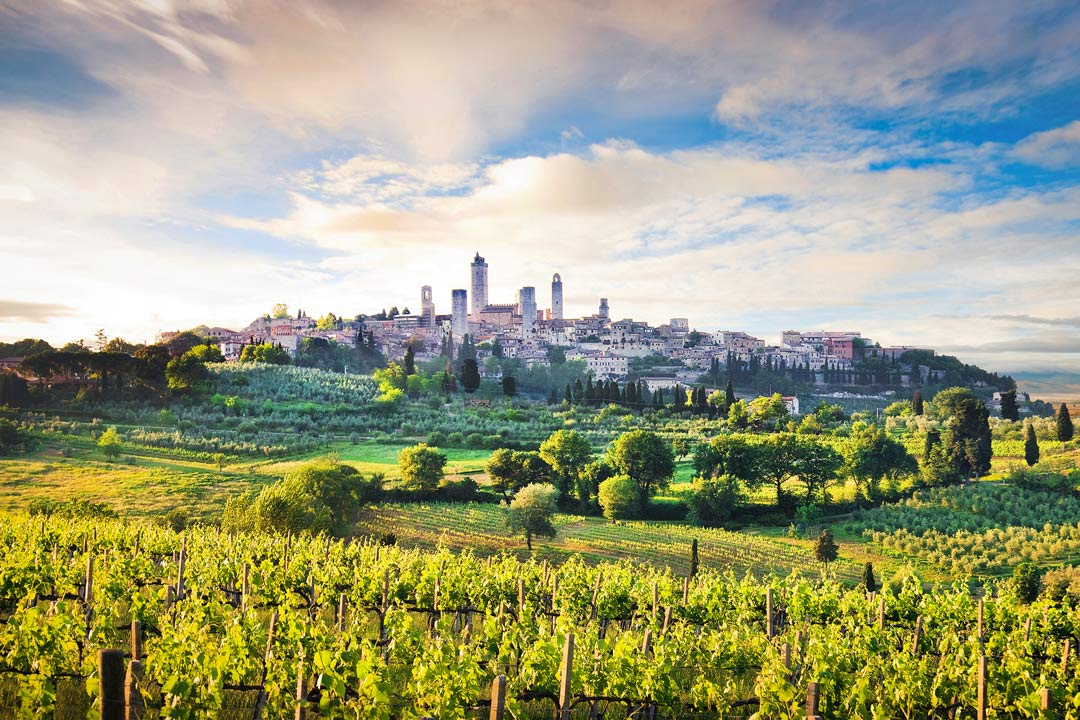 Lucious green vineyards and fields lead to the medieval town of San Gimignano