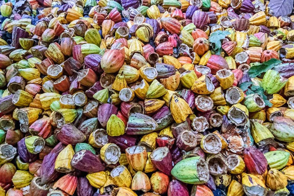 Discarded colourful cacao pods, from bright yellow to a deep pink!
