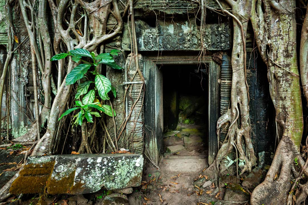 An ancient doorway at Angkor Wat surrounded by tangled roots of trees