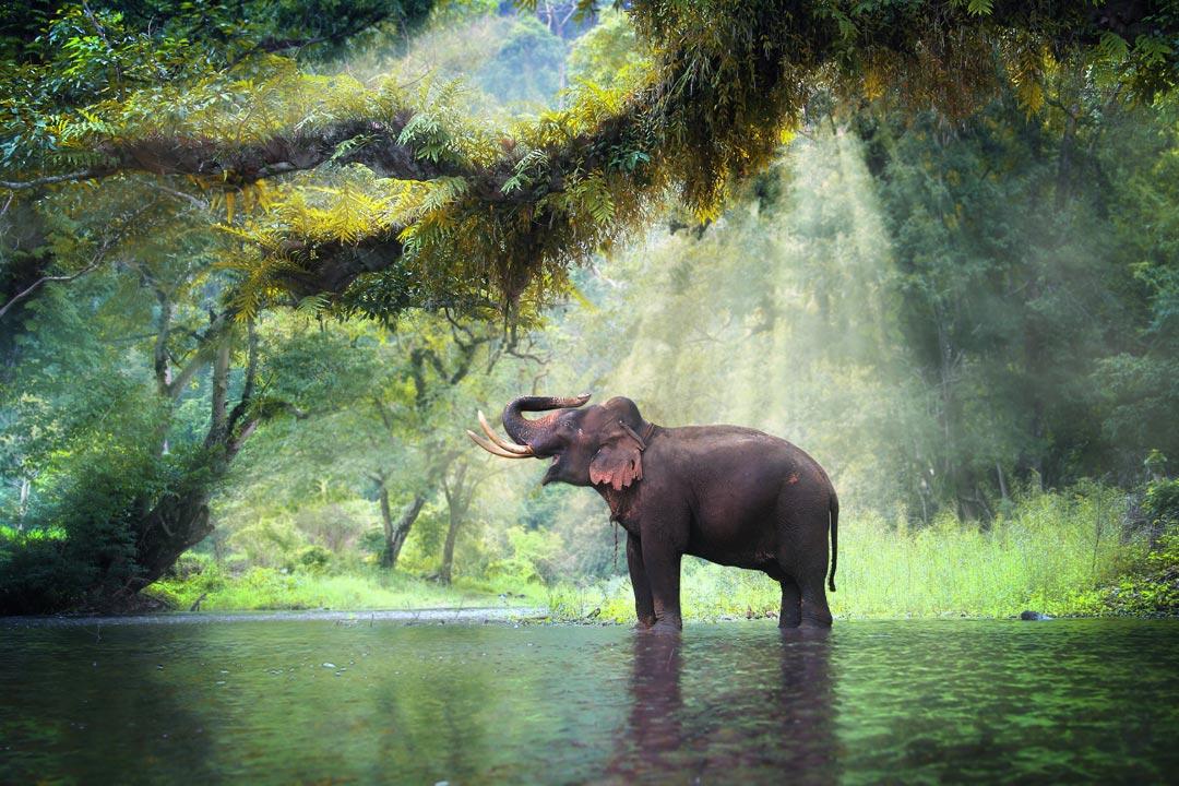 Elephant stood in water