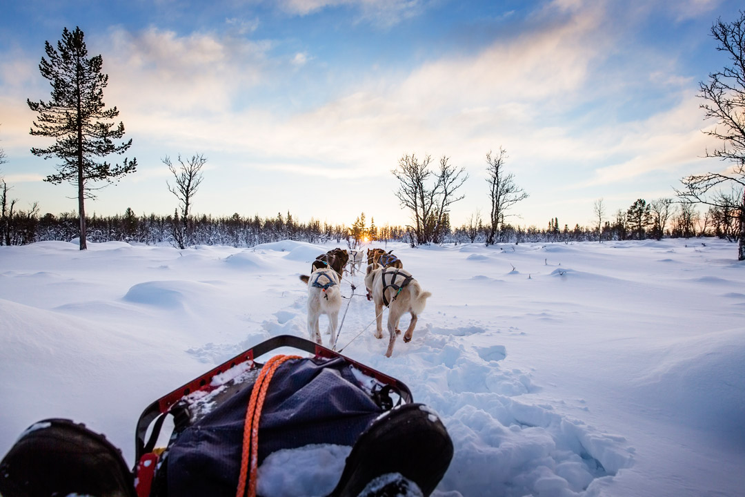 A view of huskies from the sledge being pulled in the snow