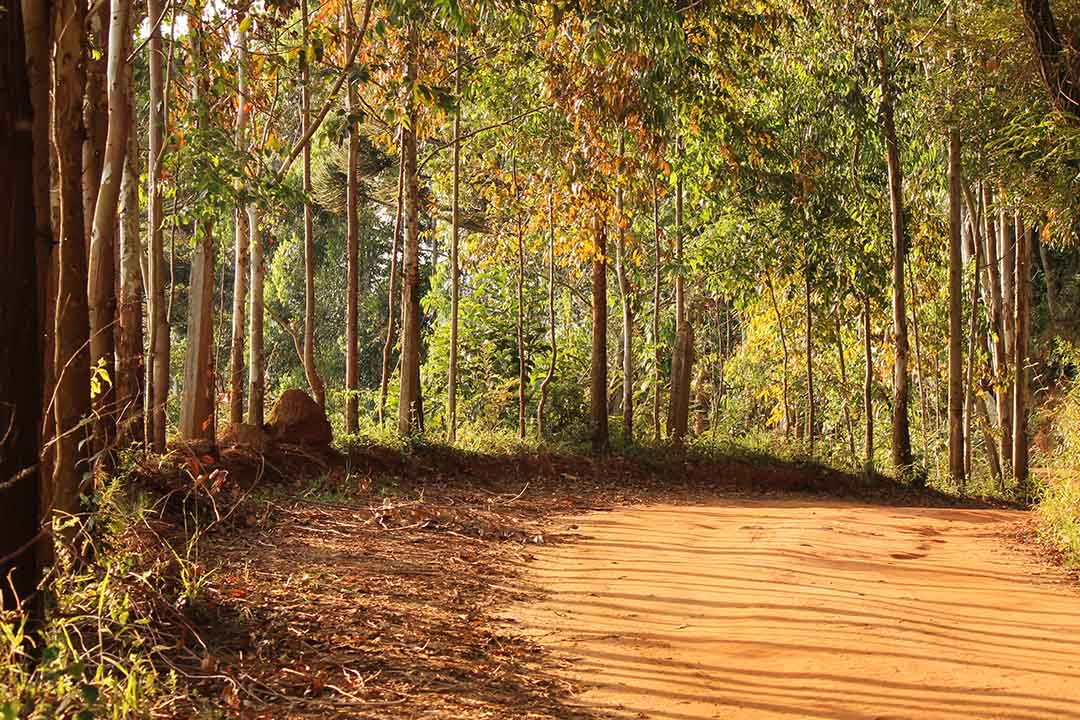 A dirt trail through bright green forests