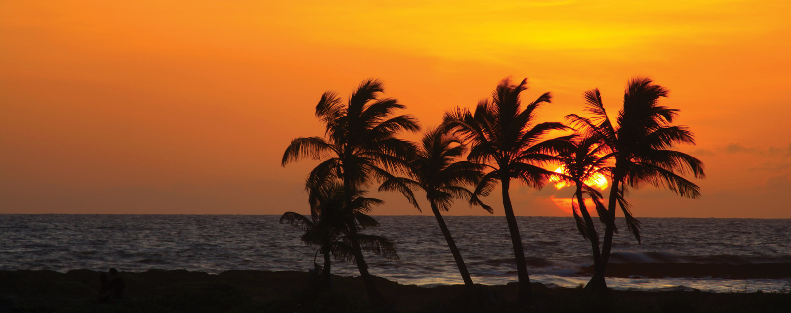 Palm trees sillouhetted against an orange sunset over the ocean.