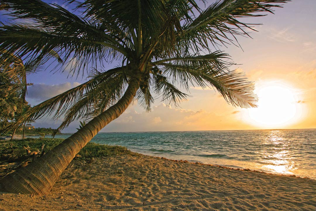 One singular palm tree leaning into the sea over a white sand beach. The sun is starting to set in the sky.