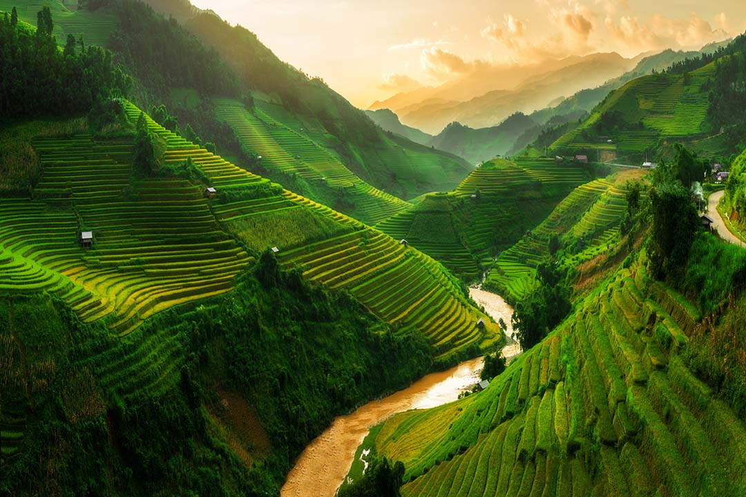 Rice field landscape in the North of Vietnam.