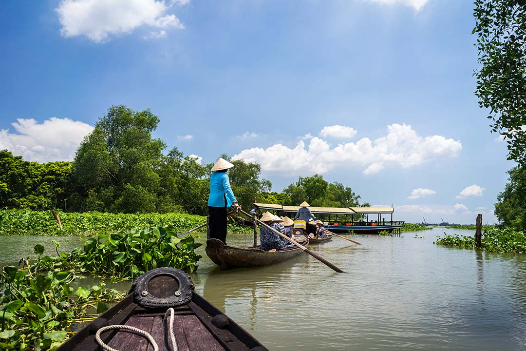 Rowing boat in Tra Su flooded indigo plant forest in An Giang, Mekong delta, Vietnam.