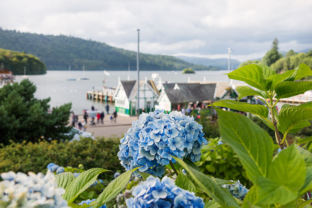 A view of Bowness pier in the background, hidden behind bright blue flowers in the foreground