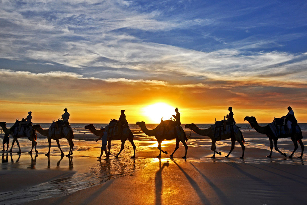 People riding camels on a beach at sunset