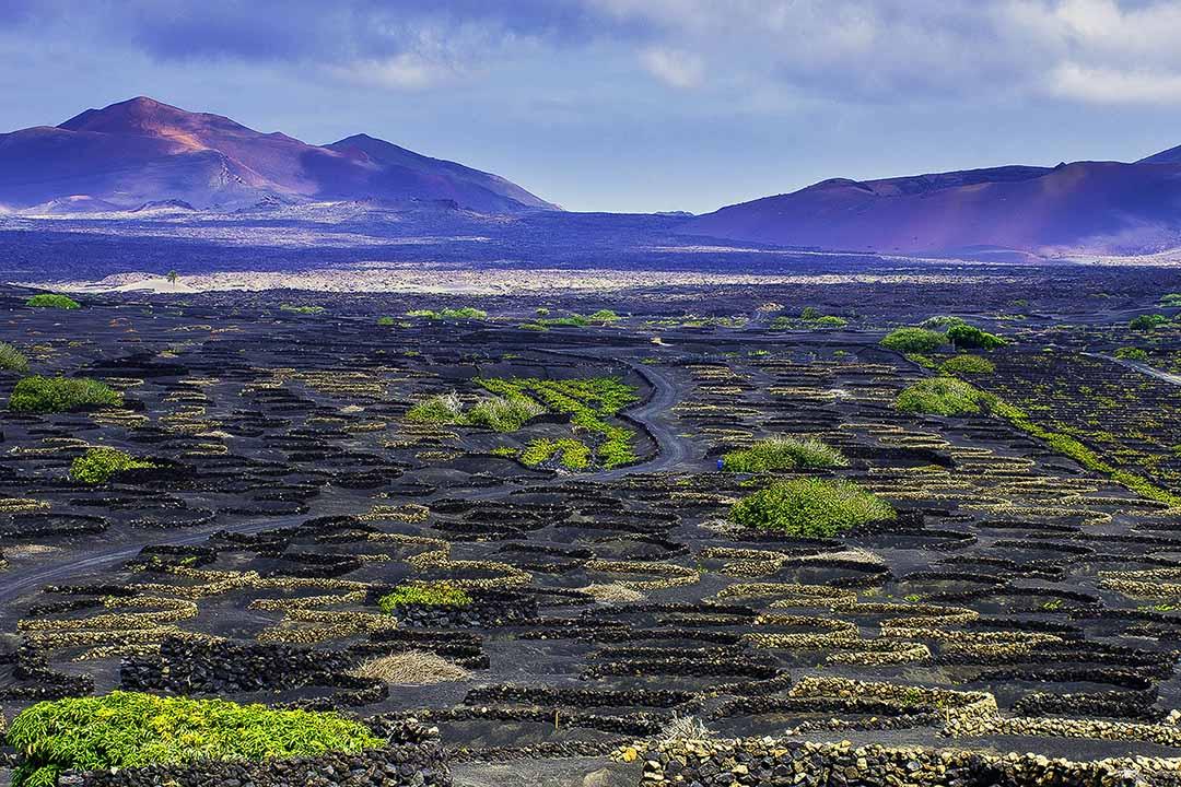 The volcanic, barren lands of La Geria wine valley