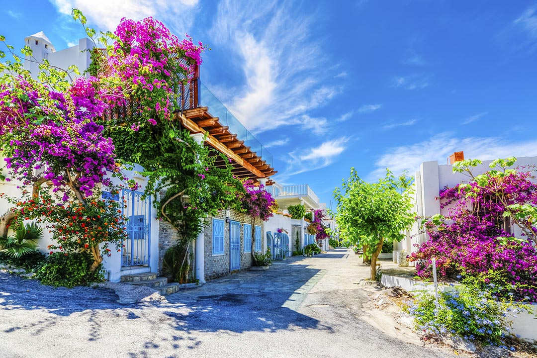 Bodrum Town with its white buildings and pink flowers.