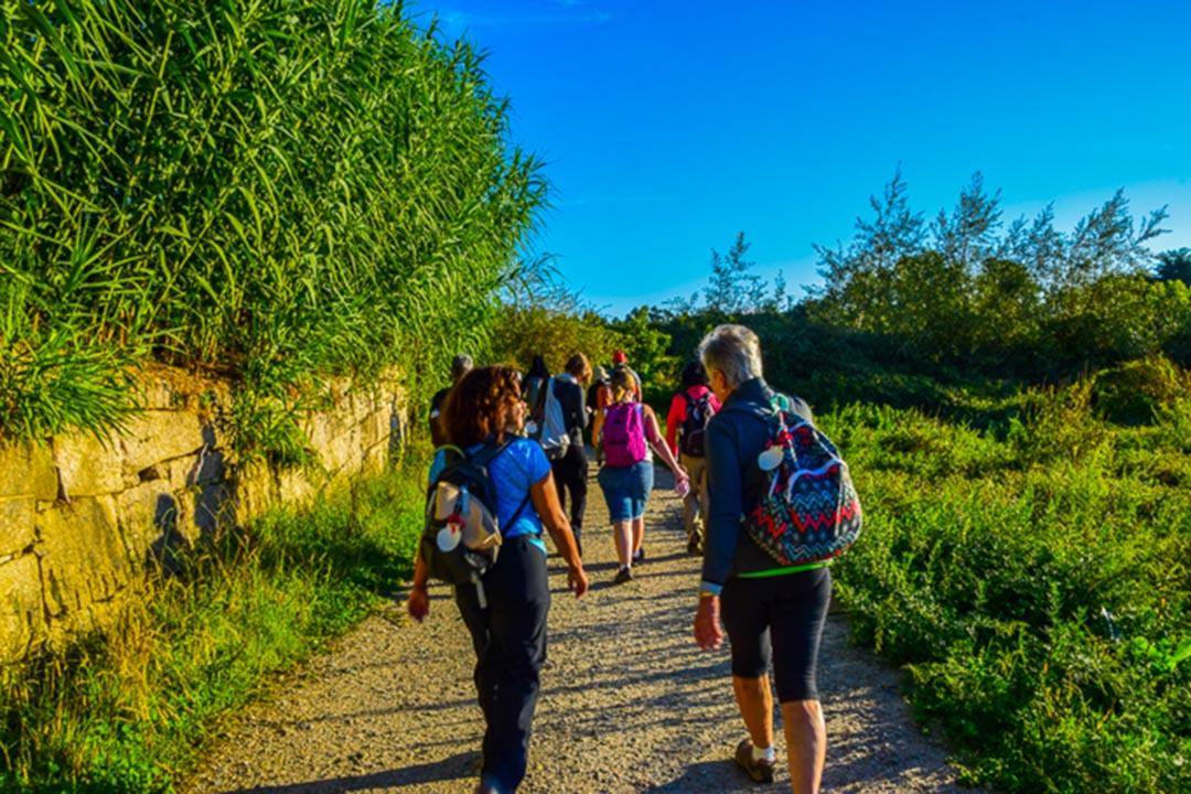 A group of pilgrims making there way down a track on the camino route