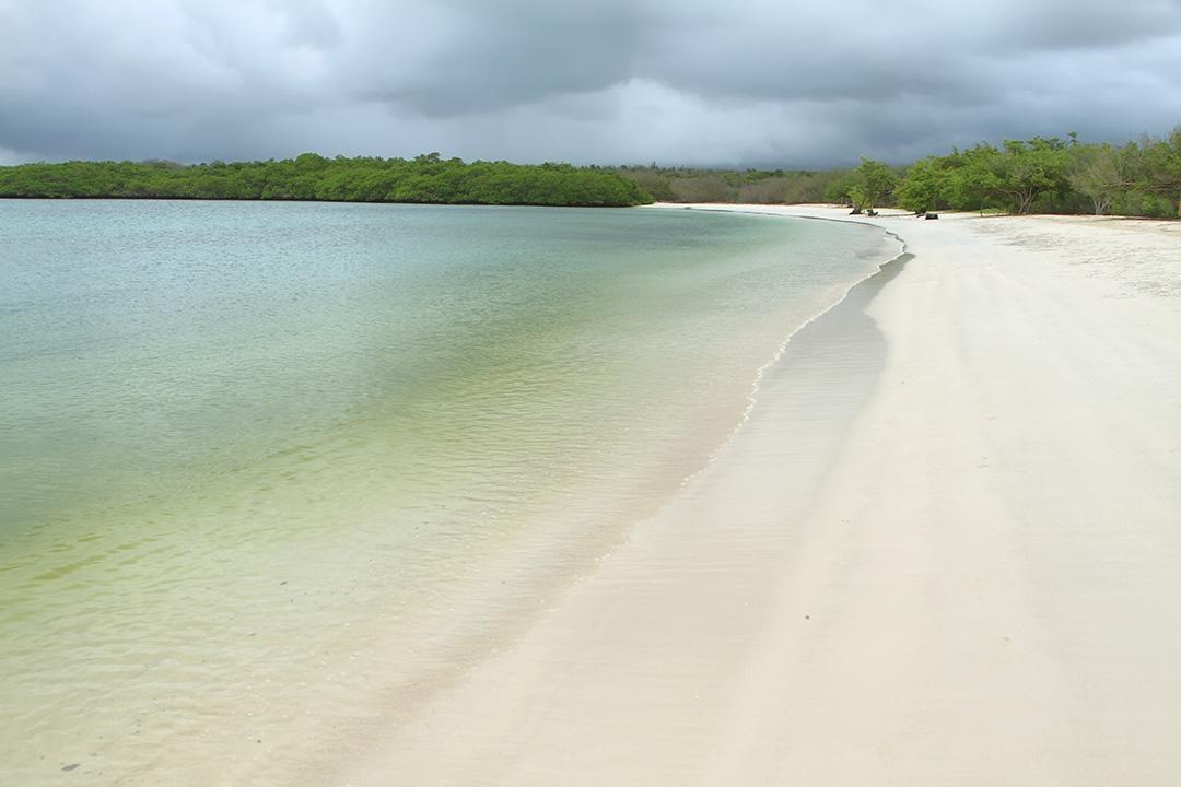 Tortuga Bay calm beach in Santa Cruz island, Galapagos, Ecuador