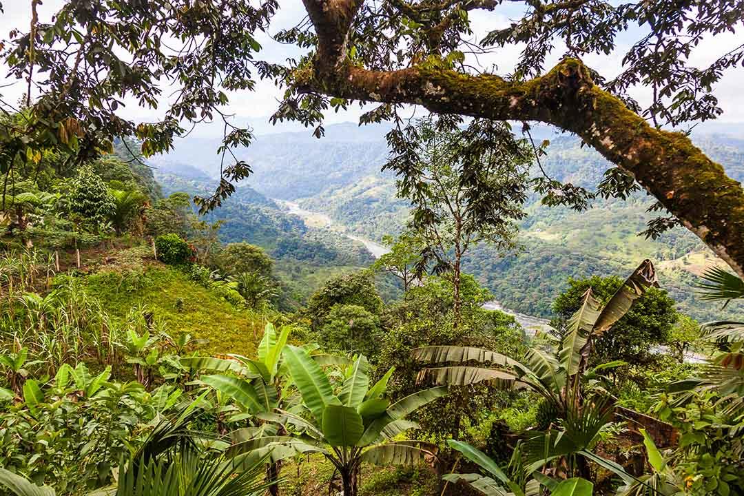 Landscapes of the Andean Choco region in northwestern Ecuador