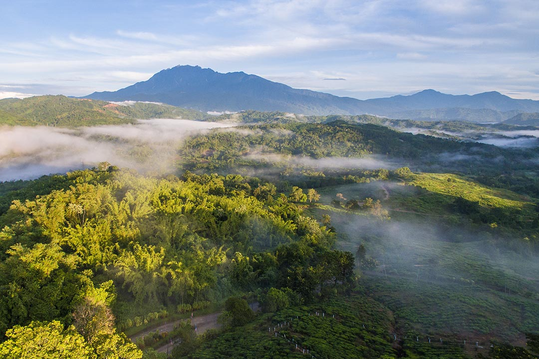 aerial view of tea plantations in Ranau Sabah with beautiful majestic Mount Kinabalu at background.
