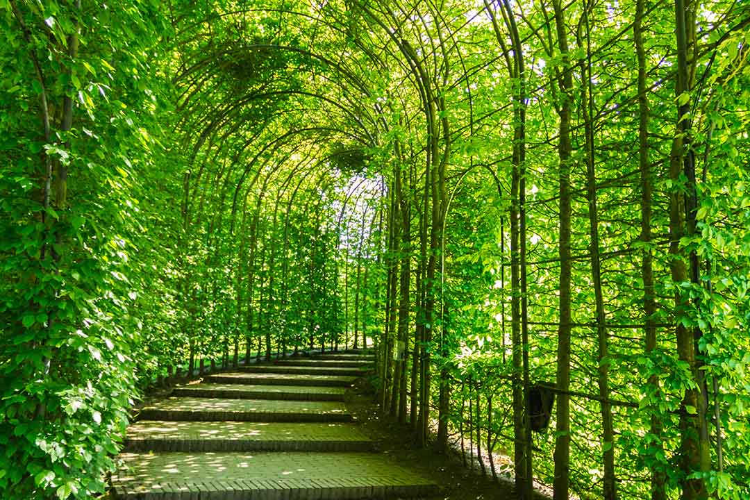 A view through a walkway covered by greenery at Alnwick Gardens