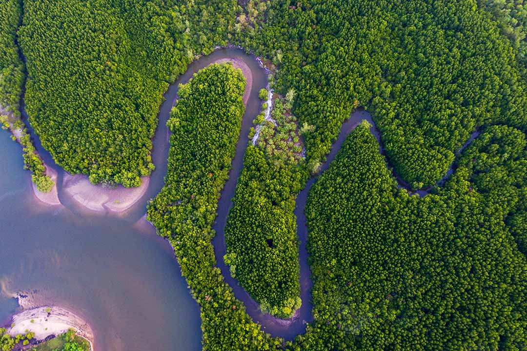An aerial view of the winding kinabatangan river surrounded by dense forests