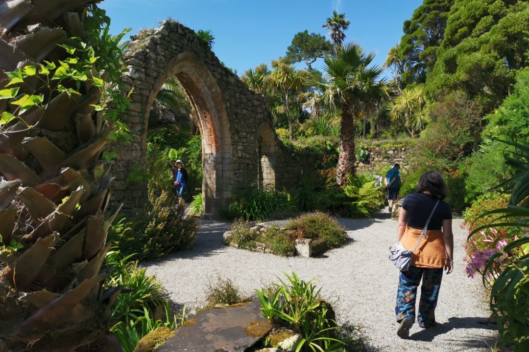 Tropical plants growing in the ruins of Tresco Abbey